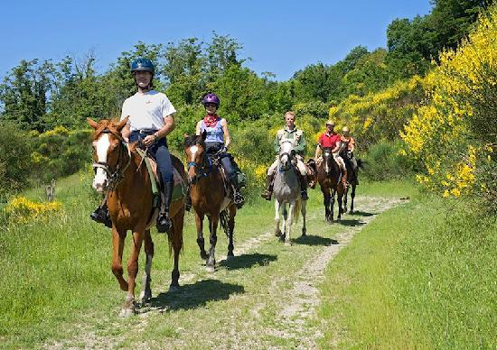 Siena Horse Riding: passeggiata