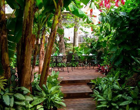 Las Clementinas Cafe & Bar : Las Clementinas garden