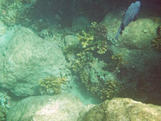 Santa Catalina, Panamá: Snorkeling Coiba