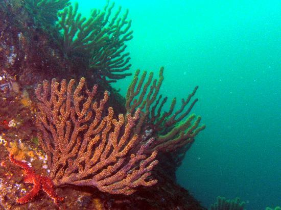Dos Mundos: Fan coral