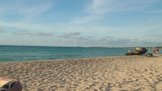 Coral Seas Garden: spiaggia