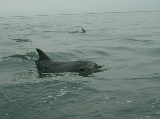 Walvis Bay, Namibië: Bottlenose dolphins next to the boat