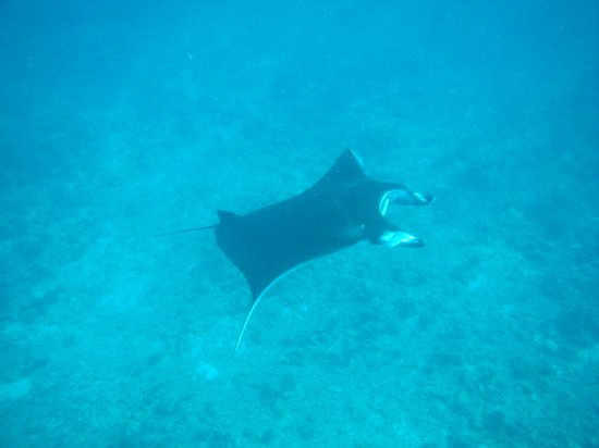 Makunudu Island: Schnorcheln mit Mantas