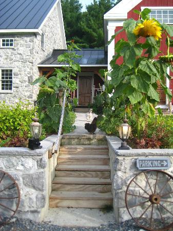 The Inn At Grace Farm B&B: Pet Silkies