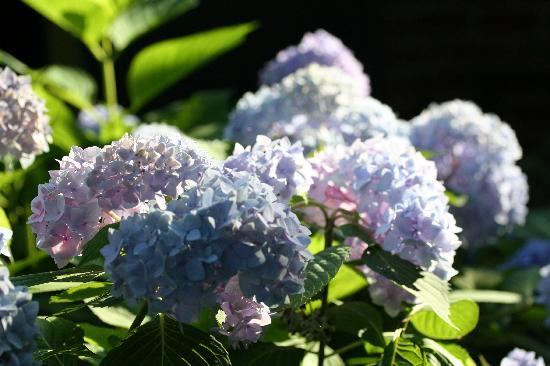 The Schooler House Bed & Breakfast: Always somehing blooming in the garden