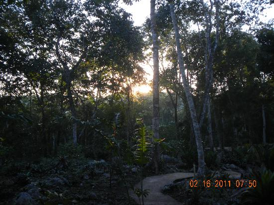 Mariposa Jungle Lodge: Sunrise through the canopy