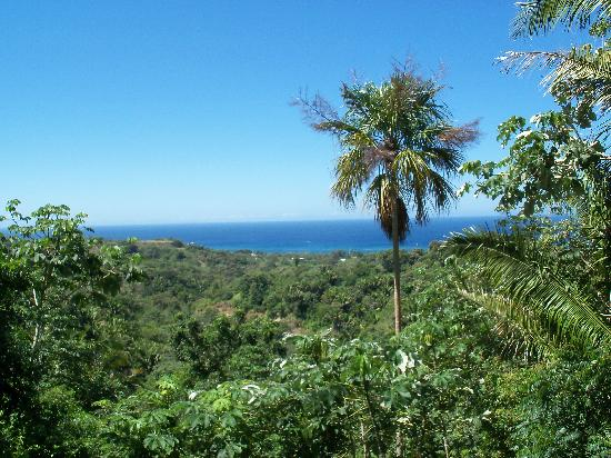 South Shore Zipline: the view from the last zip line