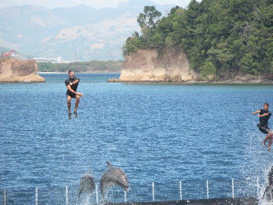 Ocean Adventure: Dolphin Show