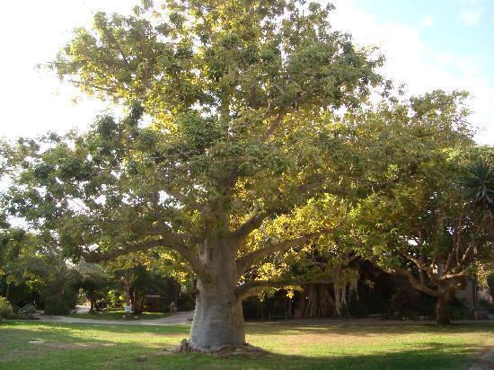 Ein Gedi, Israel: giardini kibbutz