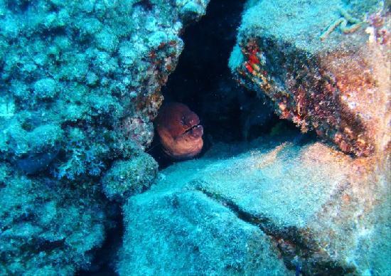 Safari Diving Lanzarote: Eel