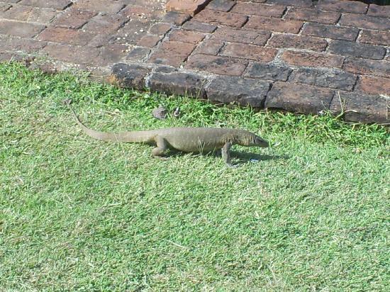 Hotel Sigiriya: varan dans l'hôtel