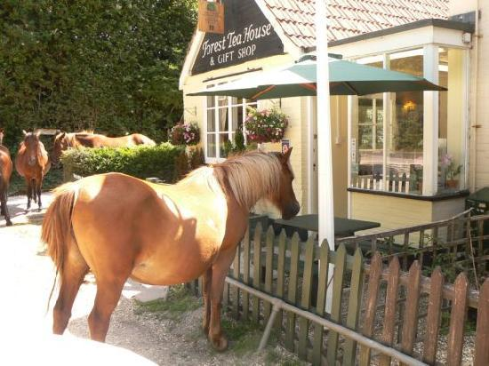 Forest Tea House: New Forest Pony comes to tea