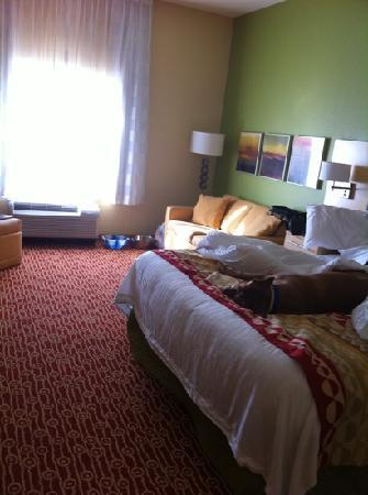 Towneplace Suites Savannah Airport: huge clean modern. and puppy likes it too obviously.