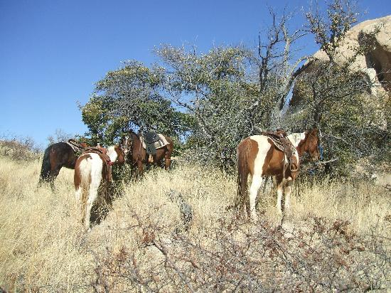Triangle T Guest Ranch: Our horses taking a break out on the trail