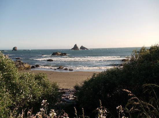 Dog Friendly Hotels Brookings Oregon