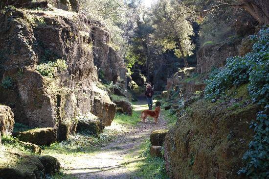 Borgo di Ceri B&B: La Necropoli di Cerveteri a 10 minuti da Ceri