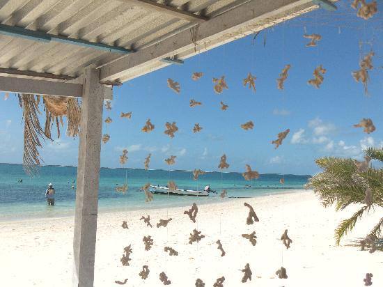 Posada Acuario: Tenda di coralli