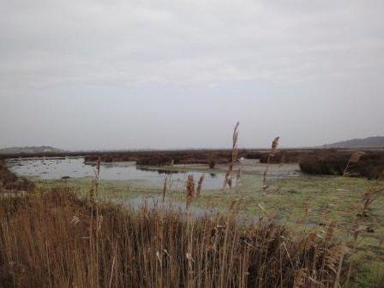 Hotel Port Beach : vue des marécages