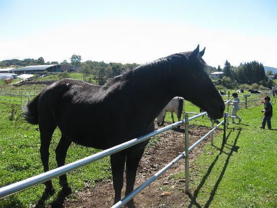 Nagawa-machi, Japan: 長門牧場の馬達