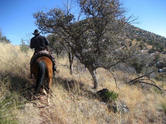 Arizona Horseback Experience: Trail ride south of Tucson