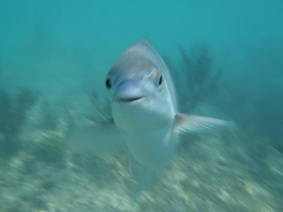 Barcelo Maya Tropical: Snorkeling in front of resort