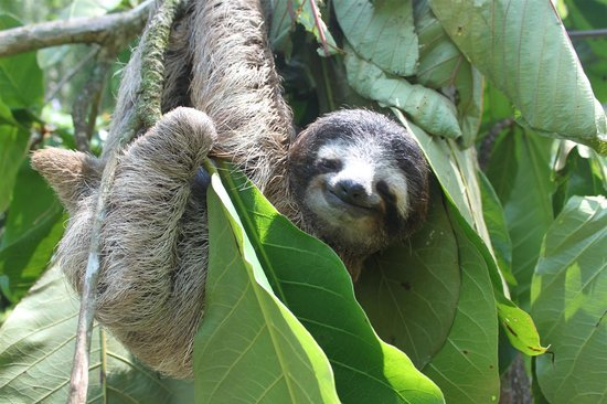 Korrigan Lodge: Sloth