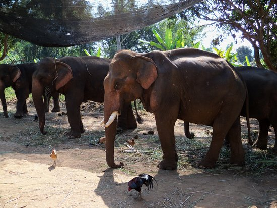 Woody Elephant Training : some of the brood....