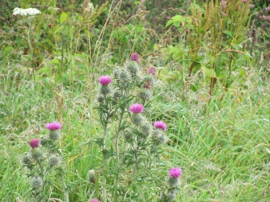 Culloden Moor, UK : Culloden Battlefield