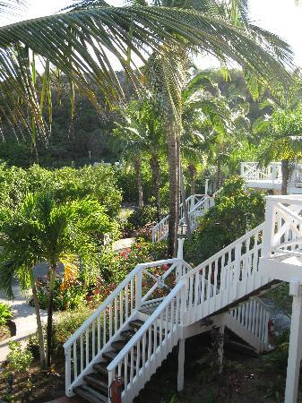 Galley Bay Resort: steps up to our room