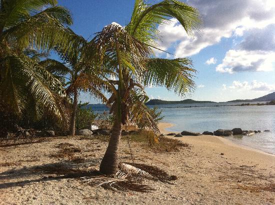 Surfsong Villa Resort: Surfsong Palm