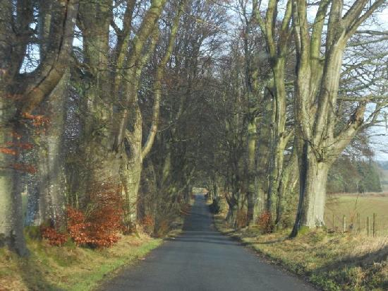 Whitmuir Hall: Drive up to the grounds