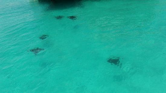The St. Regis Bora Bora Resort: Manta Rays