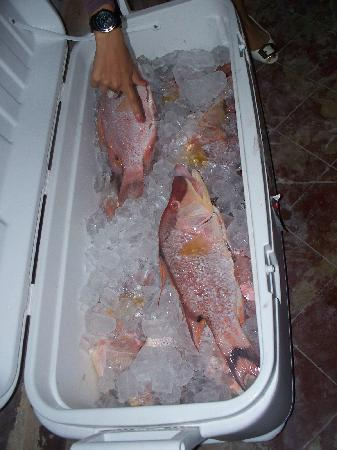 La Petita: can't get any fresher than this!