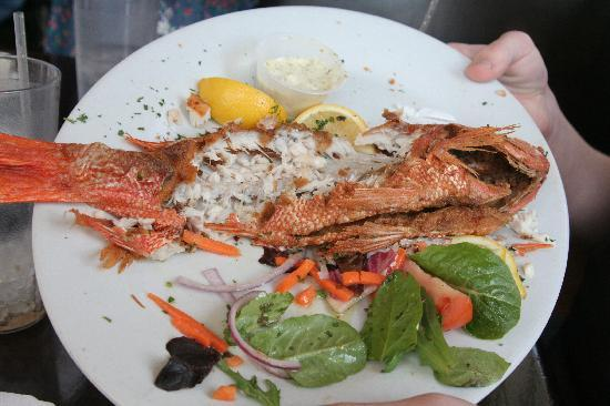 Whats left of the snapper bild fr n palm valley fish for Ponte vedra fish camp