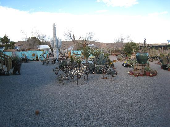 Cactus Joe S Blue Diamond Nursery Neat Stuff At