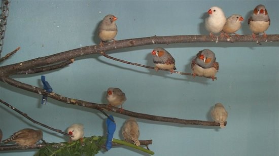 Friends Of The Aviary: small birdies