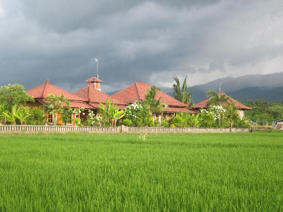 Mumbul Guesthouse: View from across the rice field