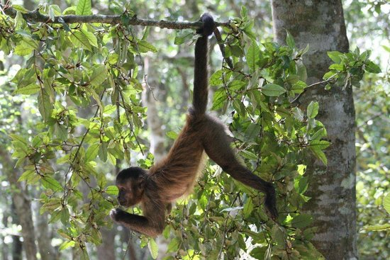 Monkeyland Primate Sanctuary: Provided by: Monkeyland