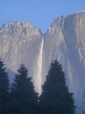 Yosemite Valley Lodge : The view as you walk to breakfast