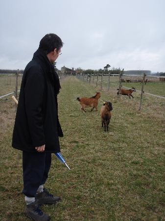 Les Chambres de la Houeyte: les chèvres
