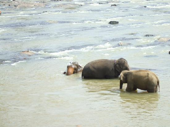 Pinnawala Elephant Orphanage: cool off