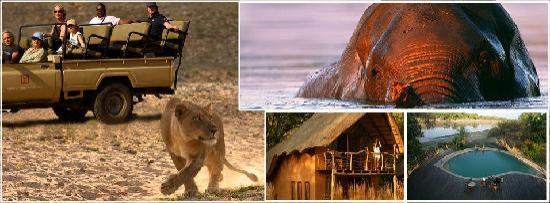 Track and Trail River Camp : Safaris South Luangwa