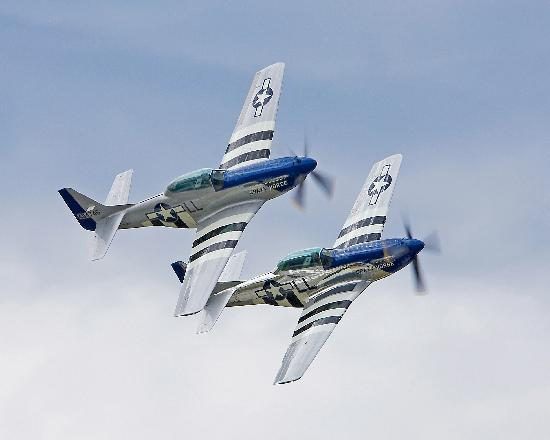 Stallion 51: Stallion's Mustangs in Formation
