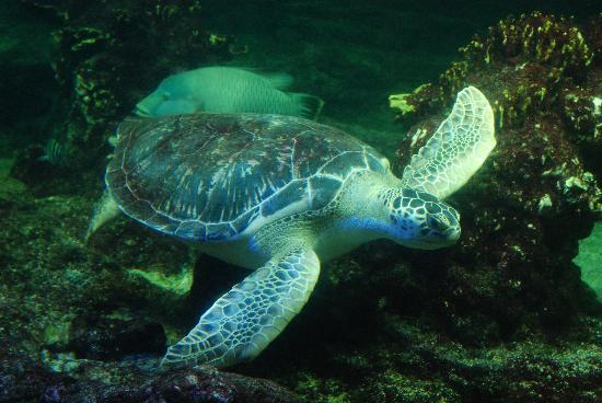 Tartaruga ciao bello foto di acquario di genova for Acquario di tartarughe