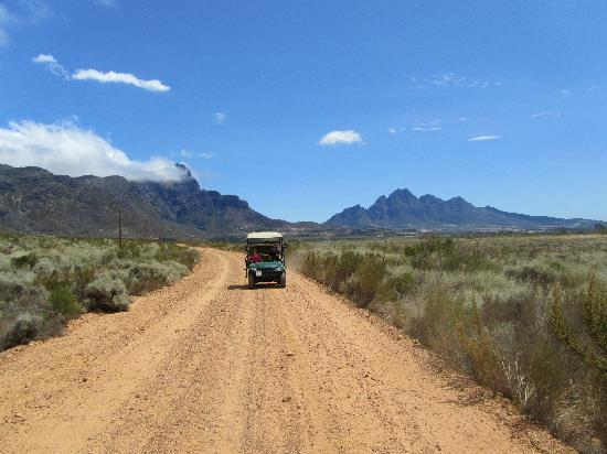 Adventure Wine Tours - Day Tours: Groot Drakenstein Mountains in the distance