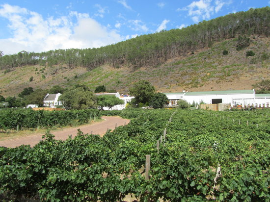 Adventure Wine Tours - Day Tours: Driving through the vineyards