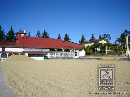 Doka Estate Coffee Tour Review