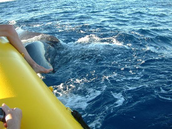 Whales in Maui : close to the raft
