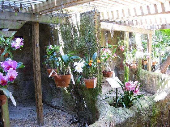 Sunken Gardens: Orchid Garden