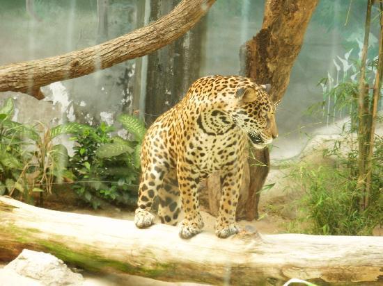 feeding the animals - Picture of Khao Kheow Open Zoo, Si Racha - TripAdvisor